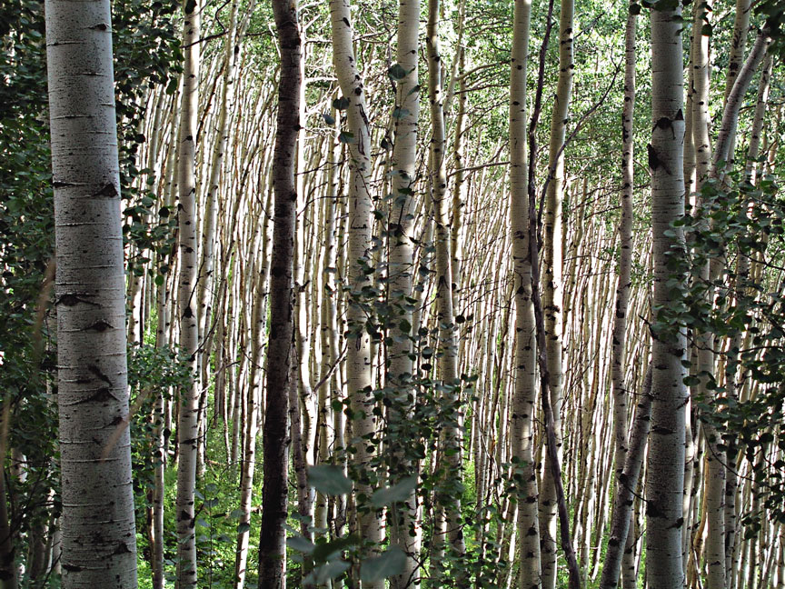 Cimarron Ridge Uncompahgre National Forest